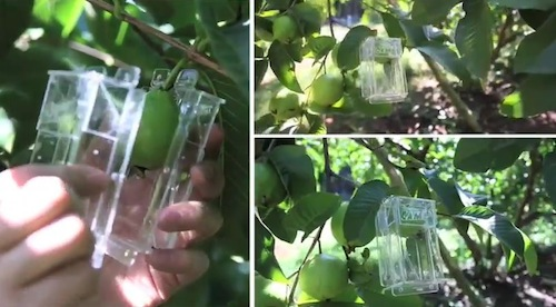 Camp Fruit Juice Fruit Molds