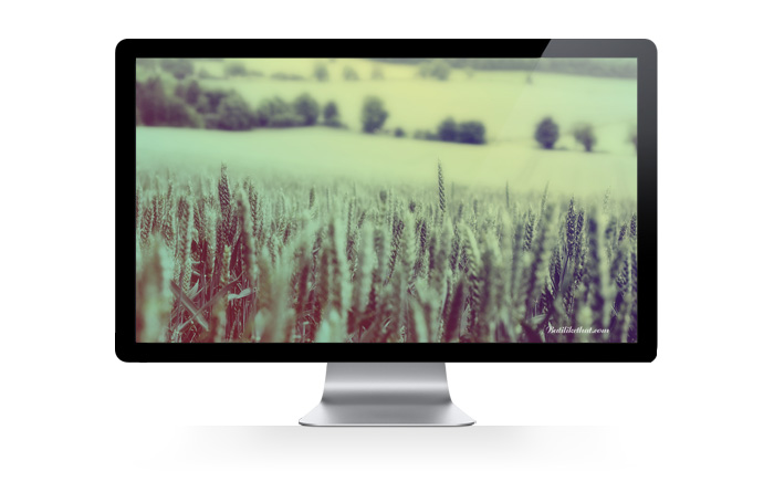 cornfield Butilikethat Wallpapers!