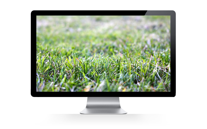 grass Butilikethat Wallpapers!