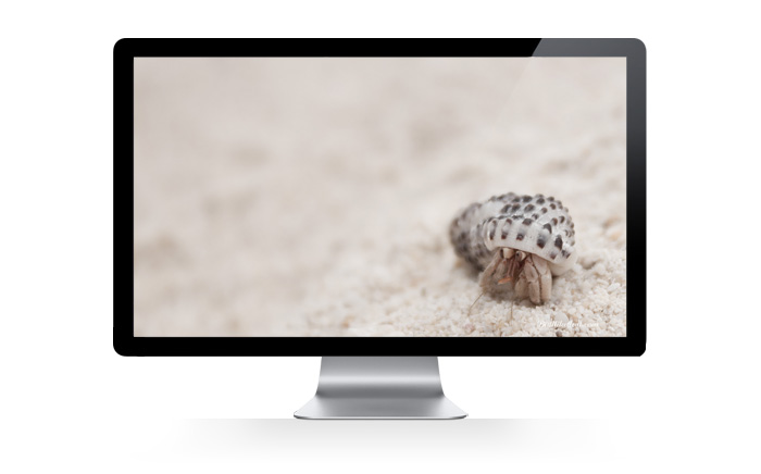 hermitcrab Butilikethat Wallpapers!