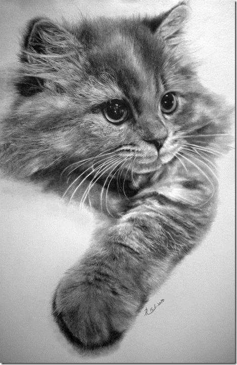 paul lung cat drawings 2 Realistic Drawings of Cats (truly unreal!)